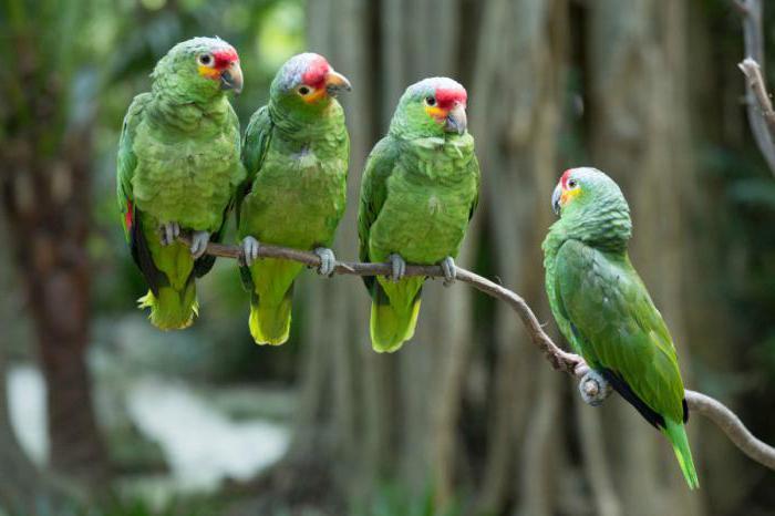 клетки для попугаев амазонов