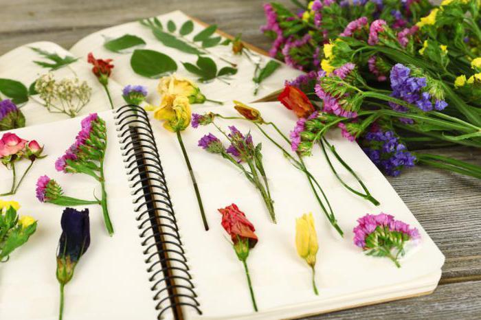 композиция из сухоцветов своими руками