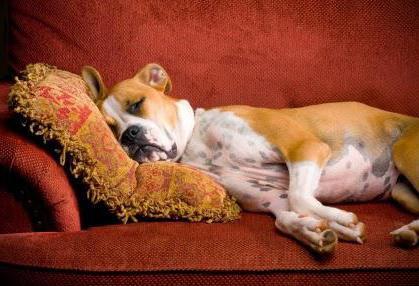 признаки беременности собак по дням