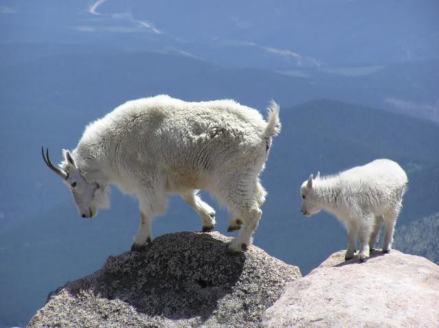 живоÑ'ные обиÑ'ающие в горах