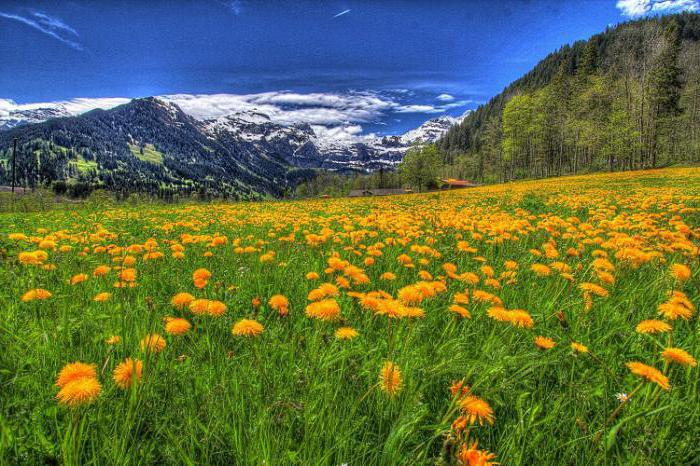 природа горы лес