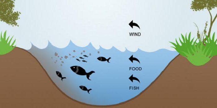 Факторы, влияющие на клев, или когда клюет рыба?