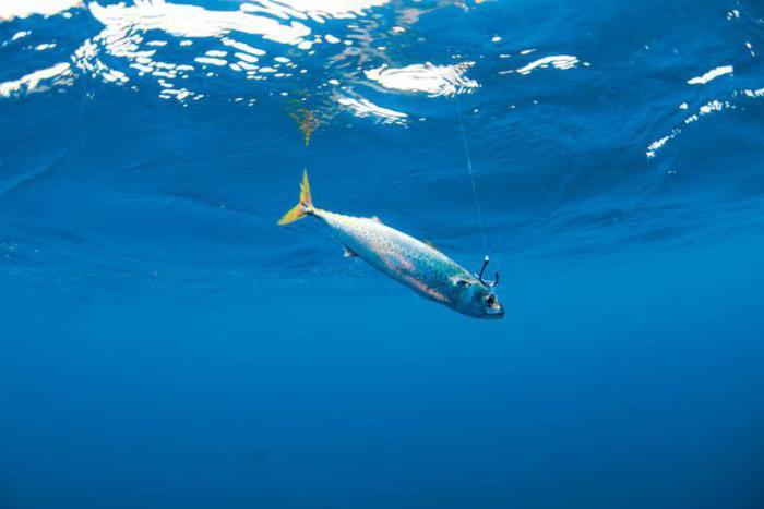 влияет ли ветер на клев рыбы
