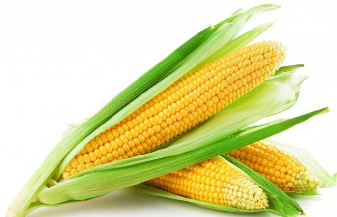 Кукурузная масло польза и вред