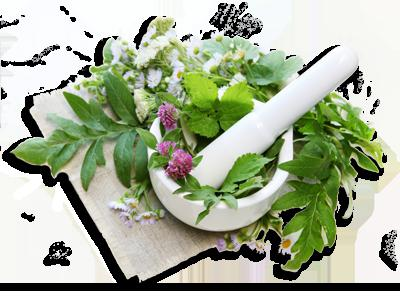 бальзам корень сибирское здоровье