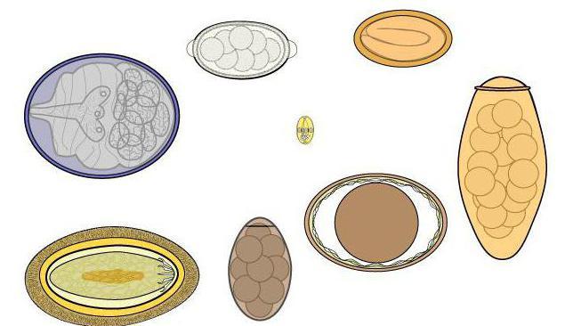 Простейшие организмы и лямблии
