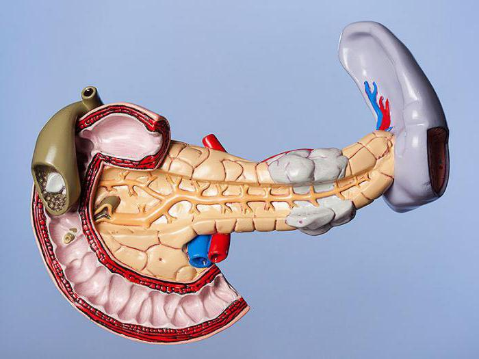 Стеатоз підшлункової залозипричини, симптоми і лікування