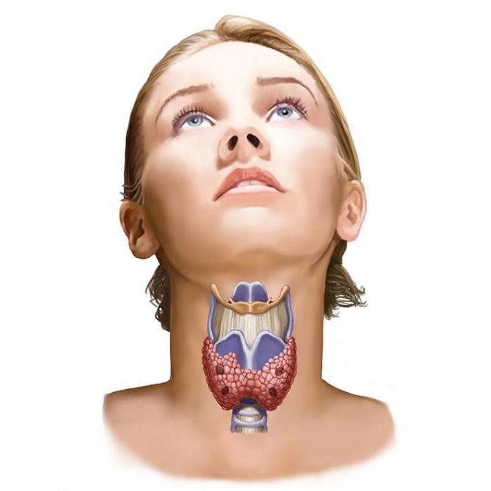 Изоэхогенное образование щитовидной железы - что это такое?
