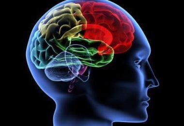 латеровентрикулоасимметрия головного мозга что это такое