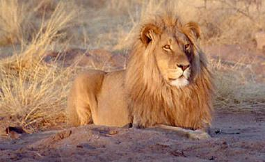 Имя Лев: происхождение и значение