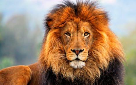 Имя Лев: происхождение и значение. Лев: характеристика имени