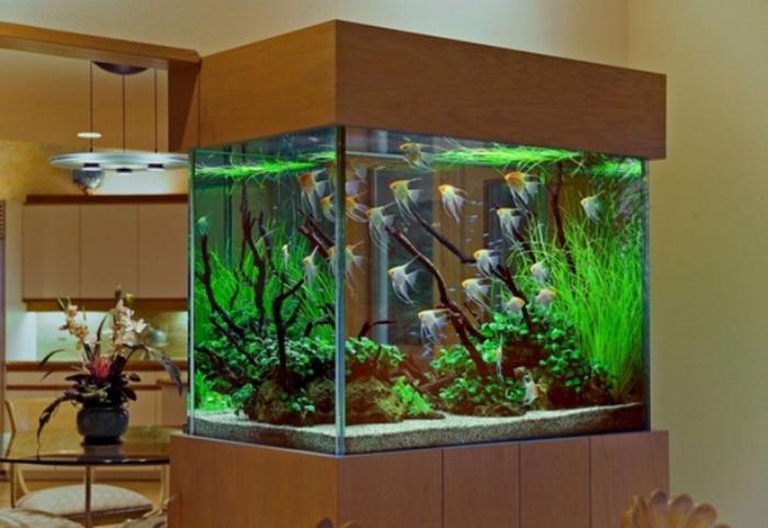 запуск аквариума с растениями