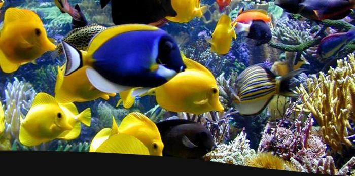 быстрый запуск аквариума