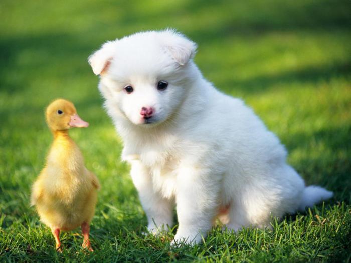 К чему снятся животные разные