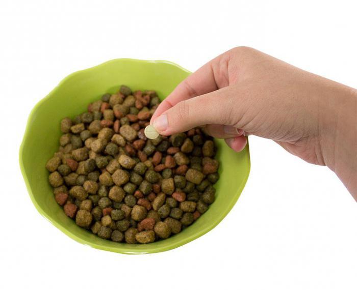 таблетки от глистов для собак азинокс фото