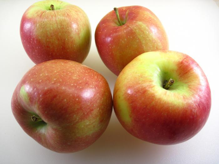Яблоня белорусское сладкое описание фото отзывы