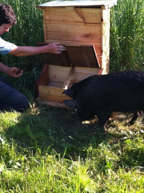 Кормушка для свиней своими руками с фото 430