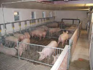 Кормушки для свиней своими руками: чертежи и видео 36