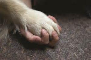 ветеринария собак