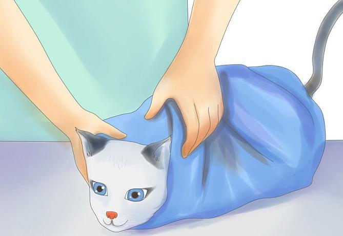 какая температура тела у кошек