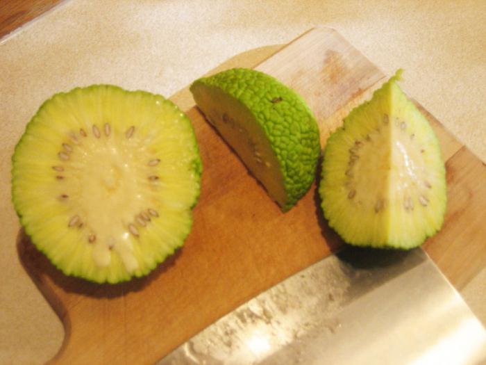 Адамово яблоко лечение суставов рецепты отзывы