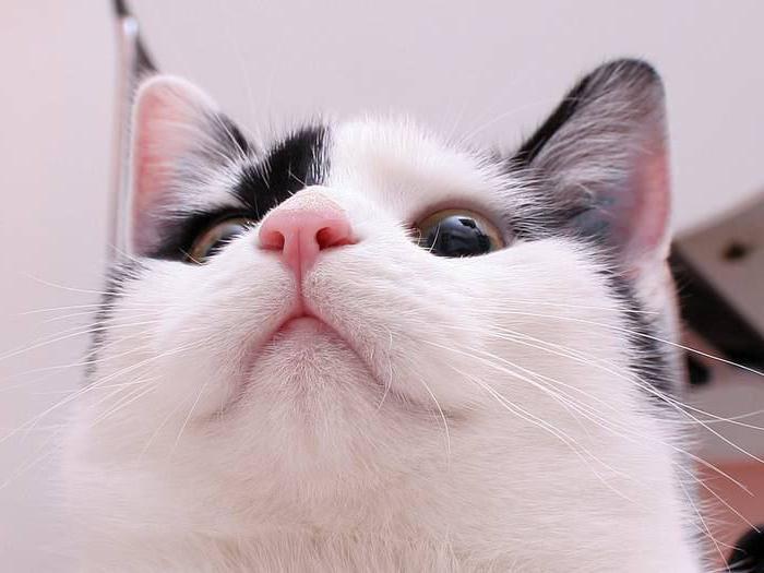 почему у кошки очень мокрый нос