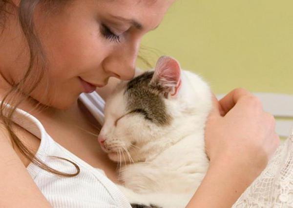 почему у кошки мокрый нос