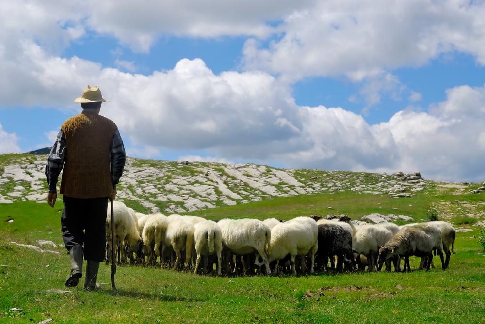 позволяют пастух и овцы картинки маникюр использованием