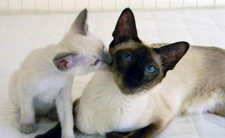 От каких кошек меньше шерсти