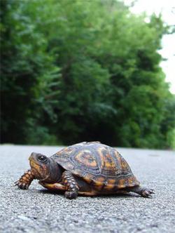 Как назвать черепаху мальчика