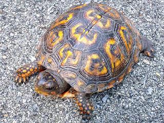 Как назвать сухопутную черепаху