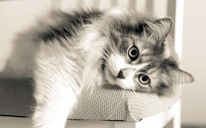 простые клички для котов