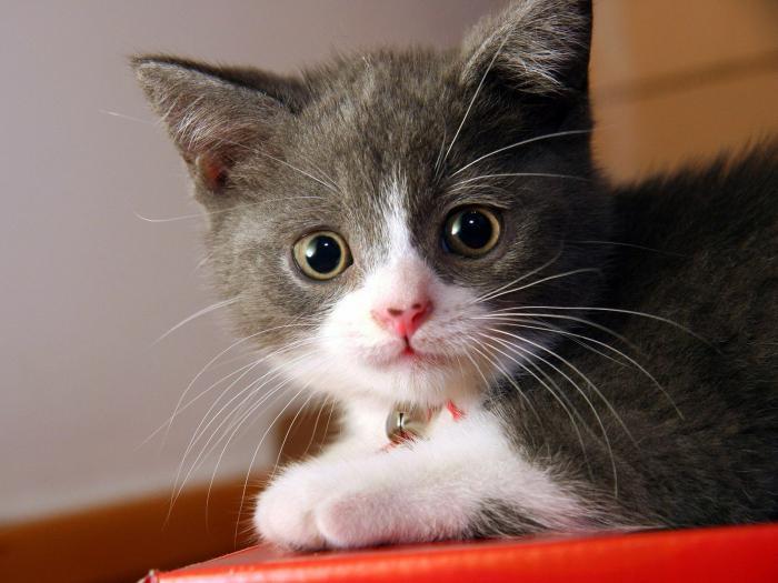 домашние кошки и коты