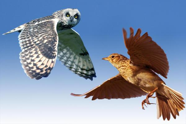 Как найти, сова либо жаворонок человек? Как найти, сова либо…