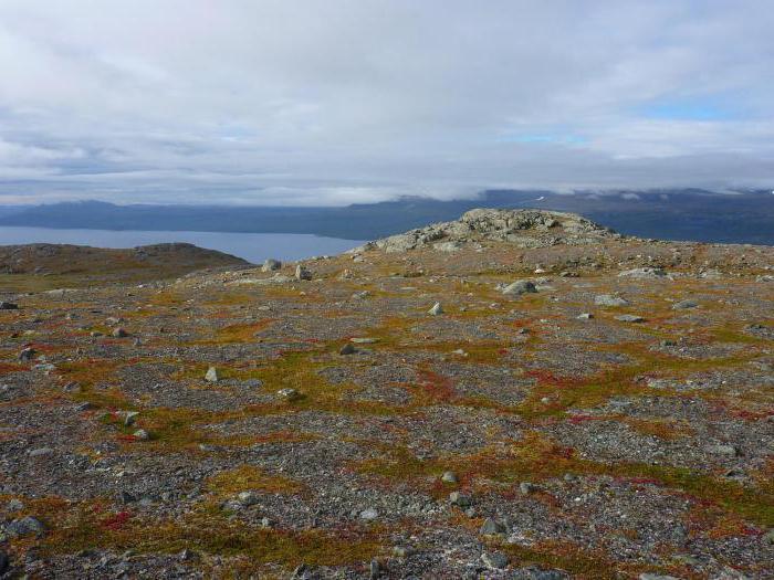 картинка арктические почвы фото можно увидеть