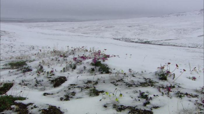 картинка арктические почвы данной категорией идут