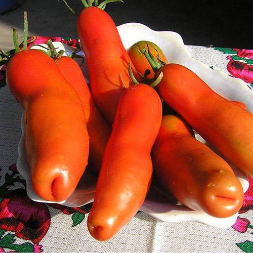 помидоры женское счастье фото обязан выплачивать