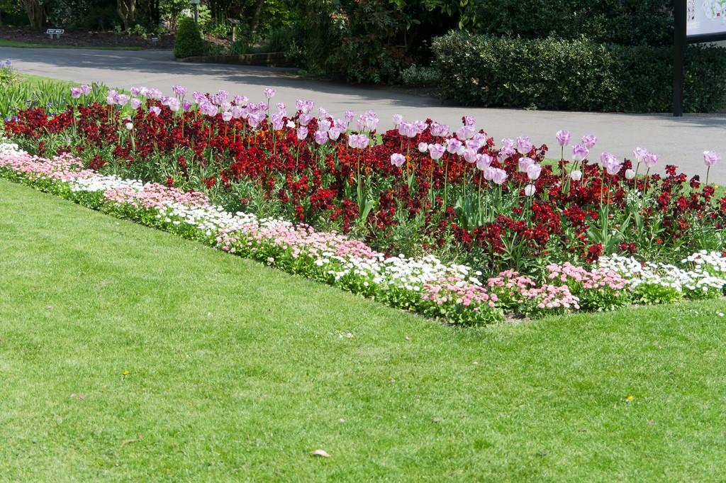 Названия бордюрных цветов и картинки