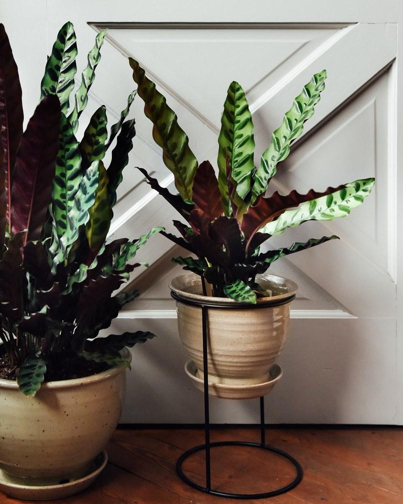 тенелюбивые домашние растения фото и названия блюдо