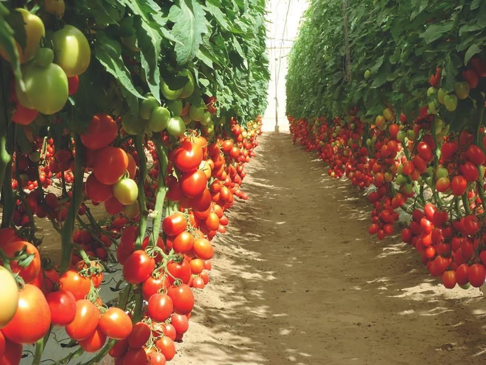 На земле выгодно выращивать