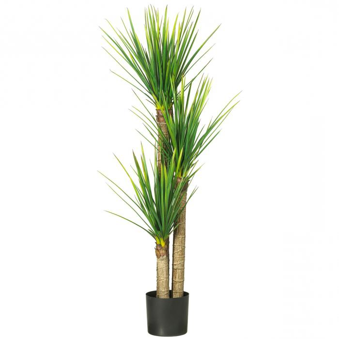 как ухаживать в домашних условиях за пальмой драцена