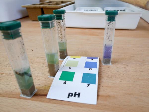 Как определить кислотность почвы самостоятельно