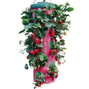 Выращивание клубники в теплице круглый год в мешках