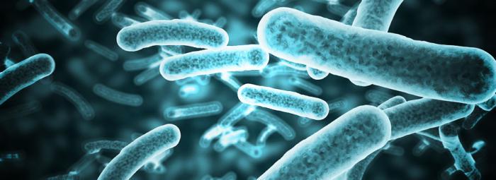 Чем опасны вредные бактерии