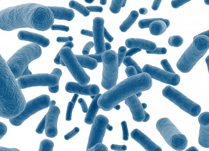 вредные и полезные бактерии