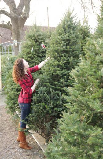 чтобы новогодняя елка дольше стояла