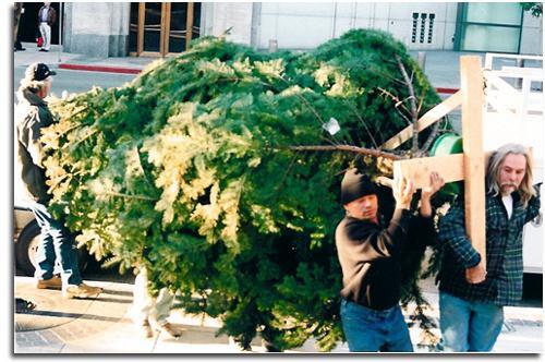 какая елка дольше стоит