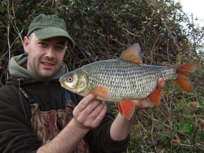 какая рыба клюет в сентябре в крыму