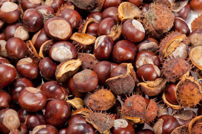 плоды конского каштана свойства