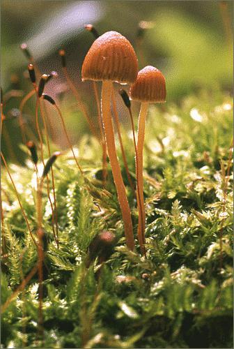 можно ли грибы при беременности